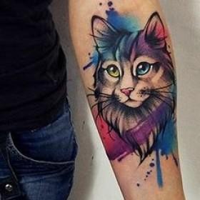 Фото тату кота <em>акварель тату на груди</em> в стиле акварель на предплечье девушки