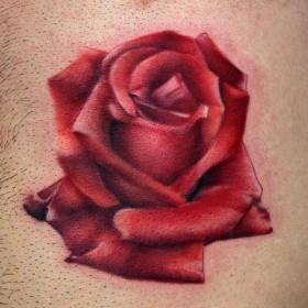 Тату на груди парня - красная роза