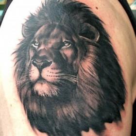 Тату на плече у парня - лев