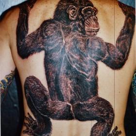 Тату на спине парня - большая обезьяна