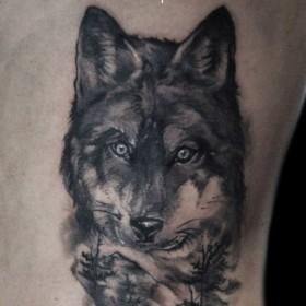 Татуировка на боку у парня - волк