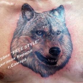 Татуировка на груди у парня - волк