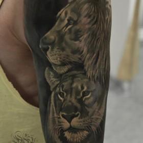 Татуировка на плече у парня - лев и львица