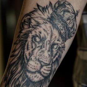 Татуировка на плече у парня - лев с короной