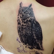 Татуировка на лопатке у девушки - сова