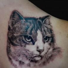 Татуировка на лопатке у парня - кошка