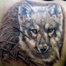 Татуировка на лопатке у парня - волк