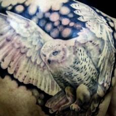 Татуировка на спине у парня - сова