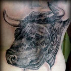 Красивая татушка на спине парня - голова быка