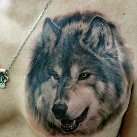 Тату на груди у парня - волк