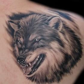 Тату на лопатке парня - волк