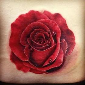 Тату на пояснице у девушки - красная роза