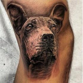 Тату на руке парня - собака