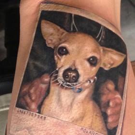 Тату на руке у парня - собака