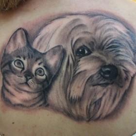 Тату на спине у девушки - <i>собака</i> собака и кошка