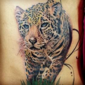 Тату на спине у парня - леопард