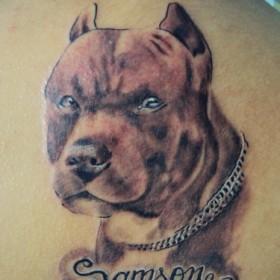 Тату на спине у парня - собака и надпись в виде имени