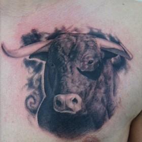 Тату у парня на груди - голова быка