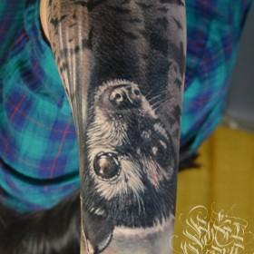 Татуировка на предплечье у парня - летучая мышь