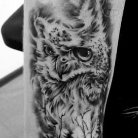 Татуировка на предплечье у парня - сова