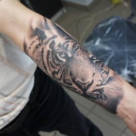 фото тигр на плече тату