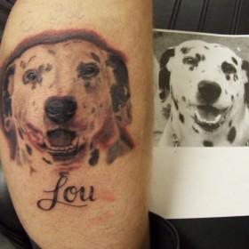 Татуировка на руке парня - собака