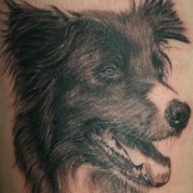Татушка на спине у парня - собака