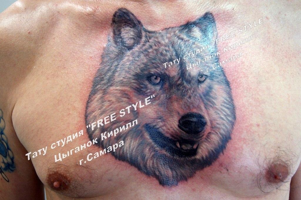 Волк на груди тату значение 179
