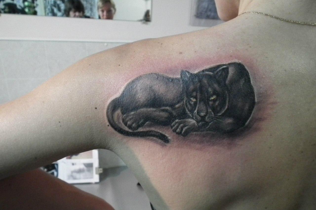 Фото тату кошки и пантеры