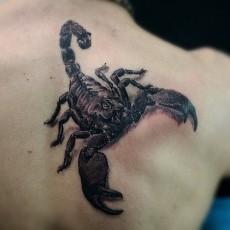 Тату на лопатке парня - скорпион