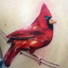 Тату в цвете на лопатке девушки - красная птица