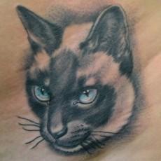 Татуировка на боку девушки - сиамский кот