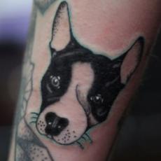 Татуировка на локте парня - бостон-терьер