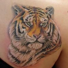 Татуировка на лопатке девушки - тигр