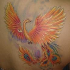 Татуировка на лопатке девушки - жар птица
