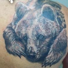 Татуировка на лопатке парня - медведь