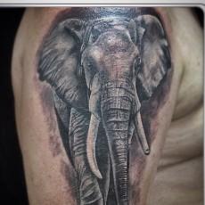 Татуировка на плече у парня - слон
