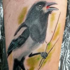Татуировка на плече у парня - ворон