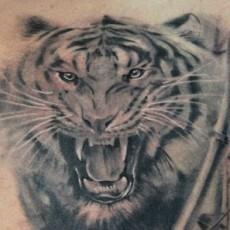 Тигр - тату на груди парня