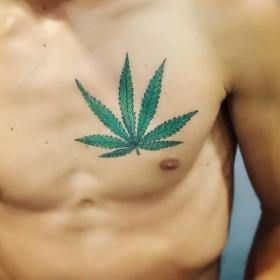 Парни марихуана семя конопли как прорастить