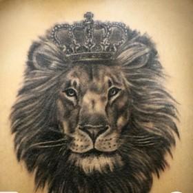 Татуировка на спине у парня - лев с короной